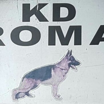 KD Roma – Razstava & körung
